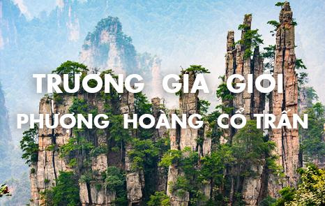 truong-gia-gioi-phuong-hoang-co-tran-109348993